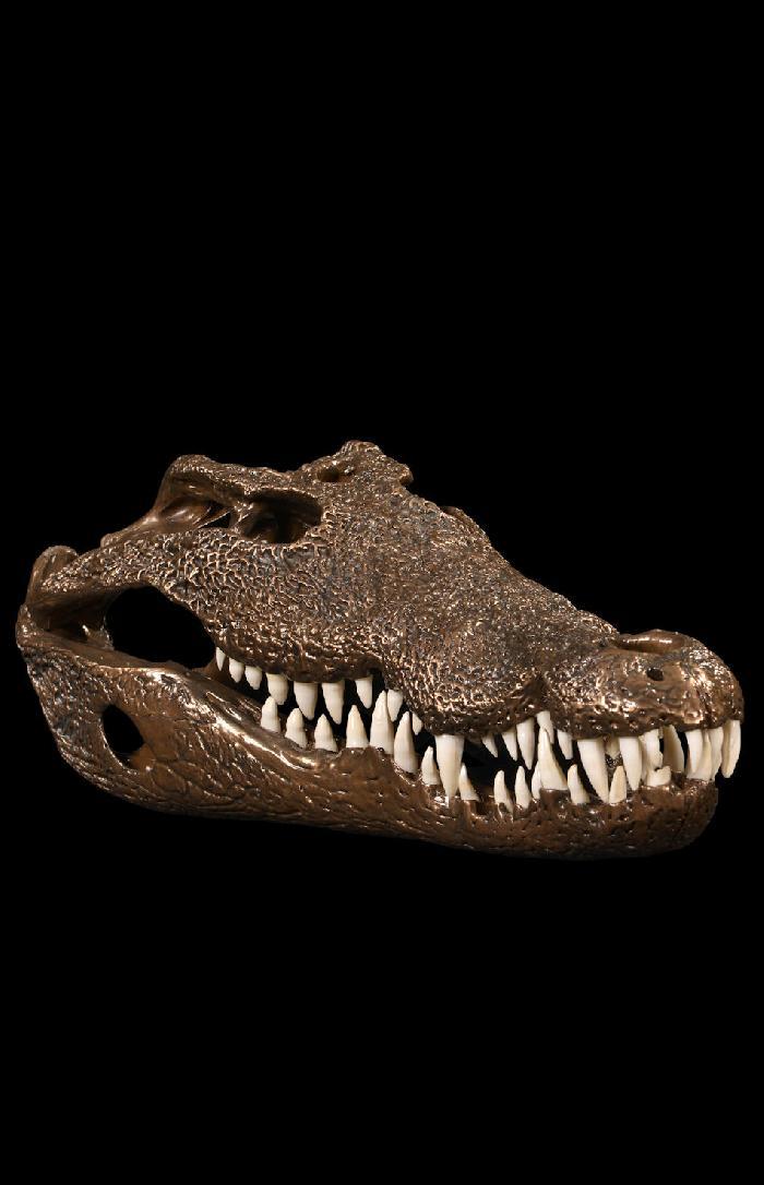 Crocodile Skull In Bronze