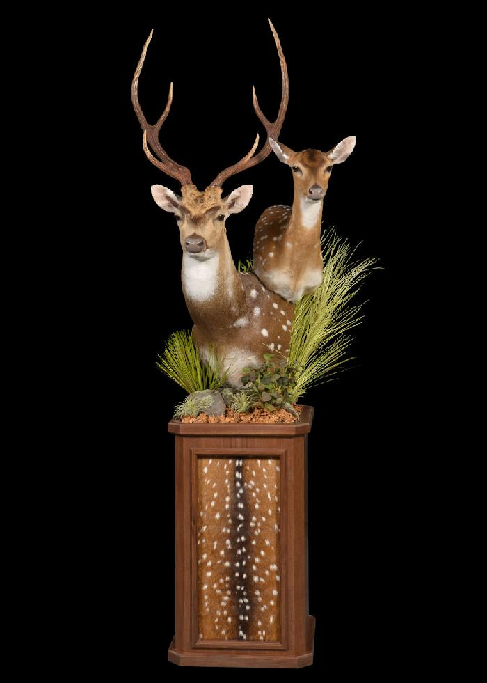 Axis Deer Double Pedestal