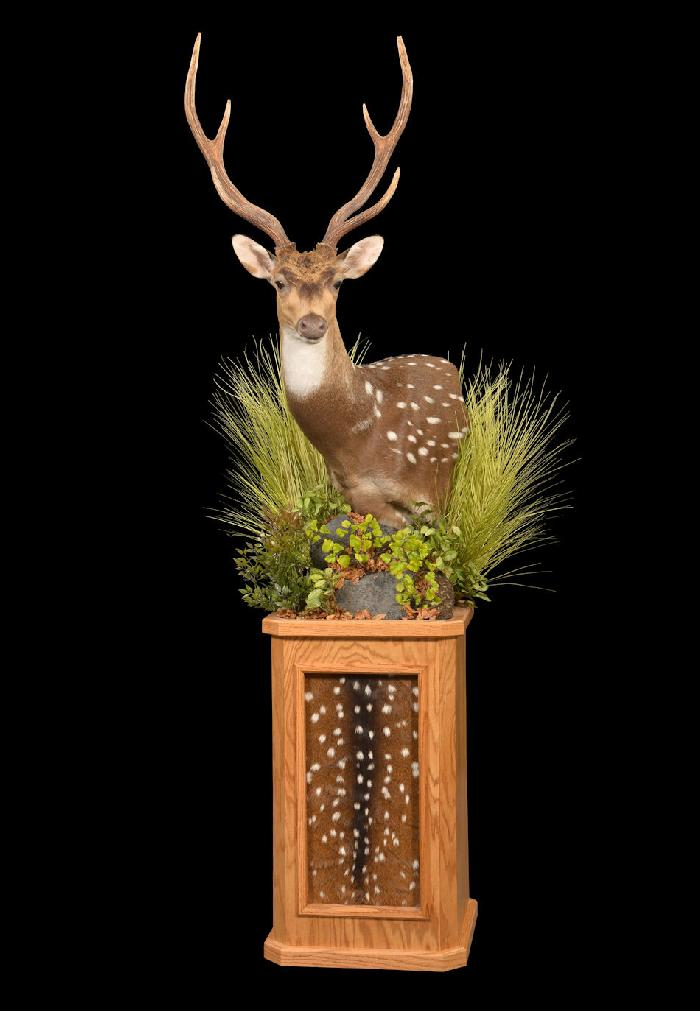 Axis Deer Pedestal Mount